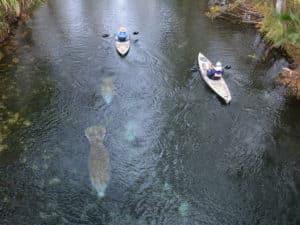 Kayakers at Silver Springs, Florida